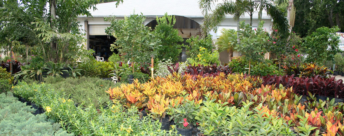 Sunscape Nursery - St Petersburg, FL