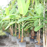 Palms from small to large available